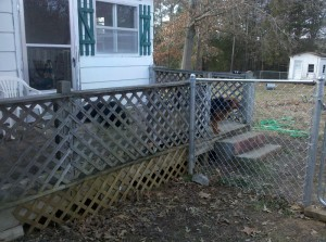 Lattice keeps dogs on porch and neighbor dogs from going under porch