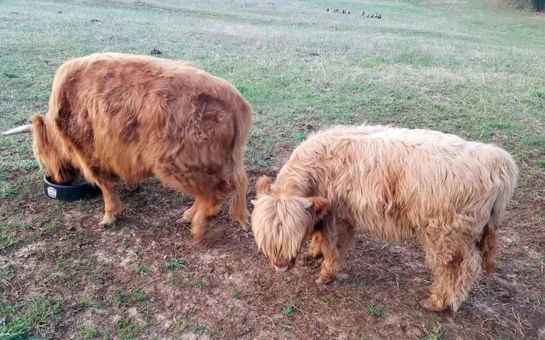 Herd Update